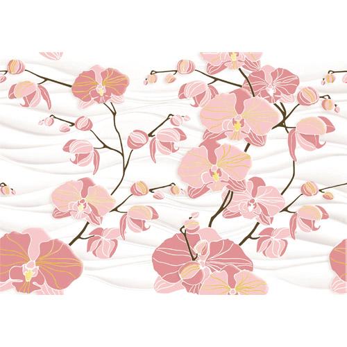 Орхидея D2